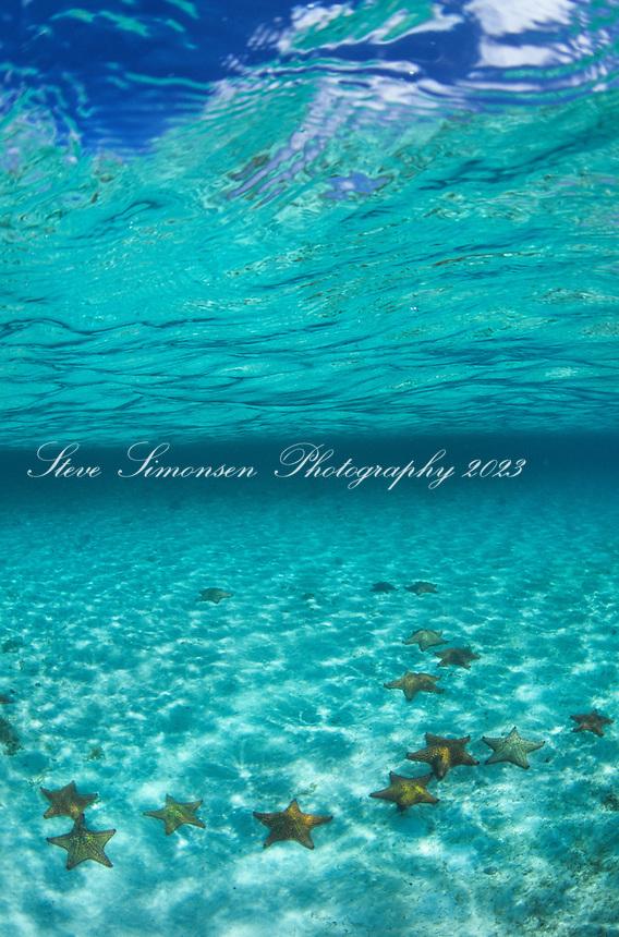 Cushion sea stars<br /> St. John<br /> Virgin Islands