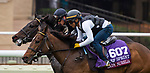 DEL MAR, CA - OCTOBER 29: Lady Aurelia, owned by Stonestreet Stables, LLC & Peter Leidel and trained by Wesley A. Ward, exercises in preparation for Breeders' Cup Turf Sprint at Del Mar Thoroughbred Club on October 29, 2017 in Del Mar, California. (Photo by Anna Purdy/Eclipse Sportswire/Breeders Cup)
