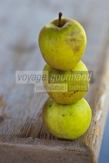 Europe/France/Normandie/Basse-Normandie/50/Batenton:  Maison de la Pomme et de la Poire - Exposition de Pommes à cidre  // France, Manche, Batenton, House of the Apple and Pear Cider apples Exhibition