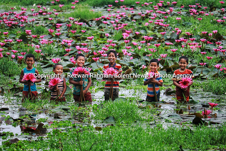Pictured: (Middle) Krishna, 9 plays with water lillies with other young boys as they harvest them by boat on a lake in Kalir Bazar, Bangladesh.<br /> <br /> A young boy playfully raises two water lilies in the air and sprays water in the shape of a heart.   The nine year old, Krishna, is part of a group of boys helping his older brother collect the vibrant pink flowers.<br /> <br /> His brother Atik, 20, sailed him and the others to pick the lilies which they will later sell at a local market.   The photographs were taken by Rezwan Rahman, on a lake in Kalir Bazar, Bangladesh.   SEE OUR COPY <br /> <br /> Please byline: Rezwan Rahman/Solent News<br /> <br /> © Reezwan Rahman/Solent News & Photo Agency<br /> UK +44 (0) 2380 458800