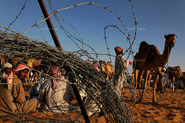 Camels are auctioned after the judging every day--although some camels could not be bought for any price. Camels converge on Abu Dhabi for an annual beauty contest. Here the traditional beast of burden becomes a pampered show animal.