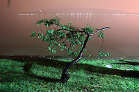 A tree on the shores of West Lake in Hangzhou, one of the most visited tourists sites in China. Zhejiang Province. China. 2010