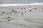 Gulls On Orond Beach