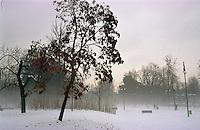 Gennaio 2009, nevicata su Milano. Parco Sempione --- January 2009, snowfall in Milan. Sempione Park