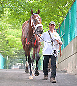 Mucho Macho Man heads back through to the barn.