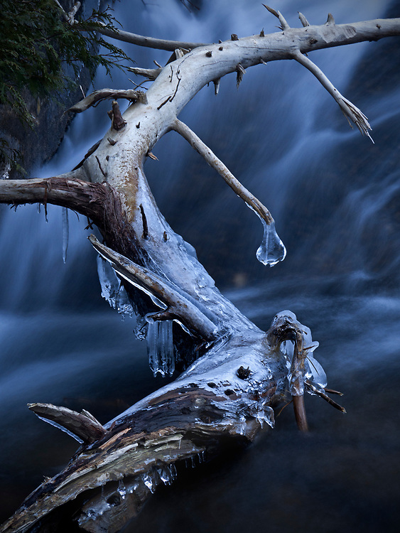 Icicles hang from a log in Jordan Stream during winter in Acadia National Park, Maine, USA