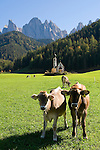 Italy, South Tyrol, Alto Adige, Dolomites, Val di Funes: church St. Magdalena and Le Odle mountains at natural park Puez-Odle