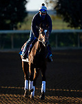November 3, 2020: Ebeko, trained by trainer Peter Miller, exercises in preparation for the Breeders' Cup Juvenile Turf at Keeneland Racetrack in Lexington, Kentucky on November 3, 2020. Jon Durr/Eclipse Sportswire/Breeders Cup