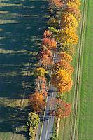 Allee:DEUTSCHLAND, Mecklenburg- Vorpommern 27.10.2005: Allee, Strasse, Felder,  Herbst, Luftbild