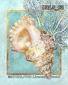 Lori, STILL LIFE STILLEBEN, NATURALEZA MORTA, paintings+++++3-Shell5,USLS62,#i#, EVERYDAY