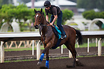 SHA TIN,HONG KONG-MAY 03: Convey,trained by Sir Michael Stoute,prepares for the Champions Mile at Sha Tin Racecourse on May 3,2017 in Sha Tin,New Territories,Hong Kong (Photo by Kaz Ishida/Eclipse Sportswire/Getty Images)