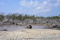 Hurricane destruction in Mangrove Habitat - Little Cayman