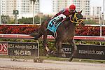 Off the Jak with Jose Alvarez in the irons winning the Florida Sunshine Millions Sprint at Gulfstream Park.  Hallandale Beach Florida. 01-19-2013