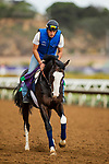 DEL MAR, CA - NOVEMBER 02:    Talismanic, owned by Godolphin Stable Lessee and trained by Andre Fabre, exercises in preparation for Longines Breeders' Cup Turf at Del Mar Thoroughbred Club on November 02, 2017 in Del Mar, California. (Photo by Alex Evers/Eclipse Sportswire/Breeders Cup)