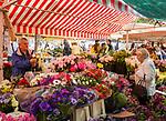 Frankreich, Provence-Alpes-Côte d'Azur, Nizza: Einkaufen in Nizza, z.B. Blumen, Obst und Gemuese auf dem Cours Saleya | France, Provence-Alpes-Côte d'Azur, Nice: shopping flowers, fruit and vegetables at Cours Saleya