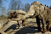 Deutschland, Hamburg, Elefanten im Tierpark Hagenbeck