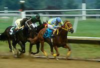 Arabian Horse Racing..