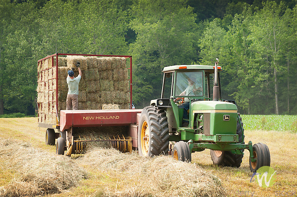 Route 220 Sullivan County traditional hay baling. Teenager, Josh, loading hay bales. Bill Frazier farm and tractor.