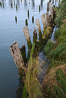 Pilings, Pile Posts, Astoria, Oregon