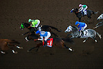 ARCADIA, CA - NOVEMBER 05: The field for the Breeders' Cup Classic races past the grandstand for the first time at Santa Anita Park on November 5, 2016 in Arcadia, California. (Photo by Alex Evers/Eclipse Sportswire/Breeders Cup)