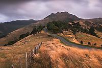 Lighthouse Road near Akaroa with Brasenose and Flag Peak (809m) of Banks Peninsula at twilight, Banks Peninsula, Canterbury, South Island, New Zealand