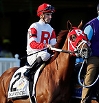 ARLINGTON HEIGHTS, IL - AUGUST 12: Oscar Nominated #2, ridden by Florent Geroux, during the post parade before the Arlington Million on Arlington Million Day at Arlington Park on August 12, 2017 in Arlington Heights, Illinois. (Photo by Jon Durr/Eclipse Sportswire/Getty Images)
