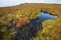 A moorland pond on Derwent Edge, Peak District National Park, Derbyshire, UK. September.