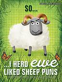 Sandra, CHILDREN BOOKS, BIRTHDAY, GEBURTSTAG, CUMPLEAÑOS, paintings+++++,GBSSIHE30X40,#bi#, EVERYDAY,sheep,sheeps