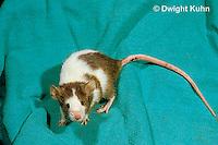 MU60-082z  Pet mouse