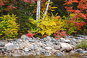 East Branch of the Pemigewasset River near the Lincoln Woods Visitor Center during the autumn months in Lincoln, New Hampshire USA.