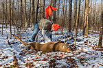 Wisconsin hunter gutting a white-tailed buck in a winter forest.