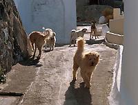 streunende Hunde in Imerovigli, Insel Santorin (Santorini), Griechenland, Europa