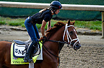 LOUISVILLE, KY - MAY 03: Vino Rosso, trained by Todd Pletcher, exercises in preparation for the Kentucky Derby at Churchill Downs on May 3, 2018 in Louisville, Kentucky. (Photo by John Vorhees/Eclipse Sportswire/Getty Images)
