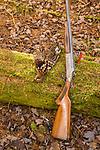 Ruffed grouse and shotgun