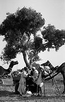 11.2008 Pushkar (Rajasthan)<br /> <br /> Men in the camel camp during the cattle fair of Pushkar.<br /> <br /> Hommes sur le camp pendant la foire aux bétails de Pushkar.