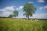 peloton racing through the sunny fields<br /> <br /> 2014 Belgium Tour<br /> stage 4: Lacs de l'Eau d'Heure - Lacs de l'Eau d'Heure (178km)
