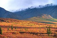 Morning sunlight over the autumn tundra in Denali National Park, Alaska