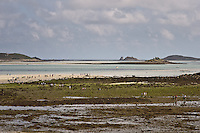 Walkers arriving on the island of Tresco having crossed from one island to another on foot during one of the lowest tides of the year.  20/09/09