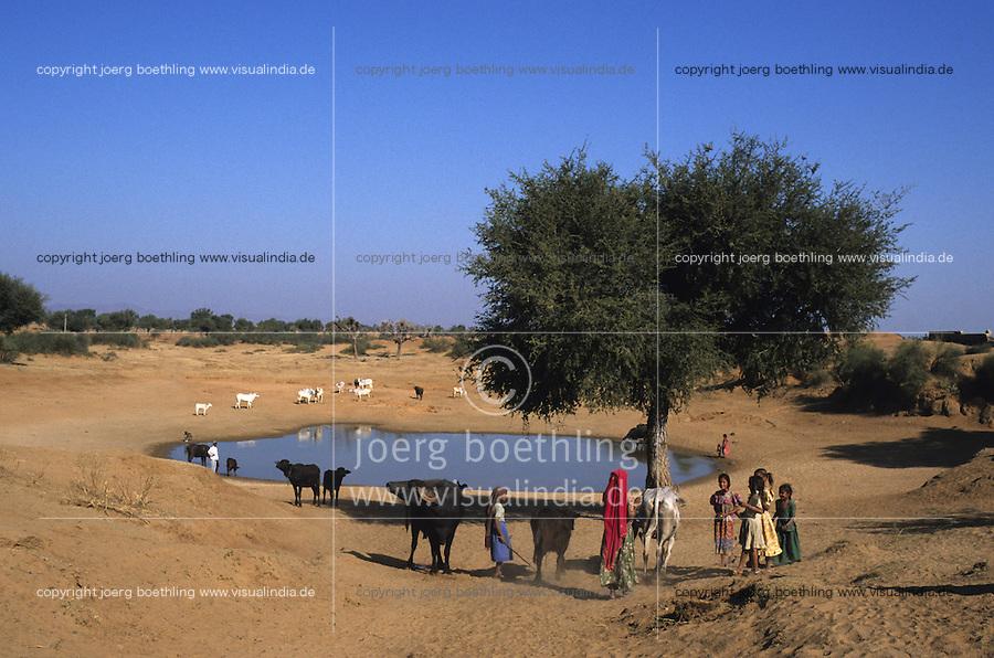 INDIA Rajasthan, Tilonia, shepherd and cattle at water hole with Babul tree / INDIEN Rajasthan, Tilonia, Hirten traenken Vieh an einer Wasserstelle in Steppe, Babul Baum