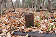 Artifact (stove pieces) at what is believed to be the Hartley's Camp in the Oliverian Brook valley in Albany, New Hampshire USA. This was a logging camp of the Swift River Railroad (1906-1916). This ironware is considered to be an artifact, and the removal of historic artifacts from federal lands without a permit is a violation of federal law.