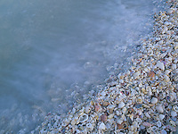 Shells at beach, Sanibel Island, Florida, USA
