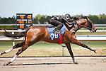 #78Fasig-Tipton Florida Sale,Under Tack Show. Palm Meadows Florida 03-23-2012 Arron Haggart/Eclipse Sportswire.