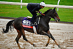October 28, 2015:  Watsdachances (IRE), trained by Chad C. Brown and owned by Michael E. Kisber , Bradley Thoroughbreds & Nelson McMakin, exercises in preparation for the Breeders' Cup Filly & Mare Turf at Keeneland Race Track in Lexington, Kentucky on October 28, 2015. John Voorhees/ESW/CSM
