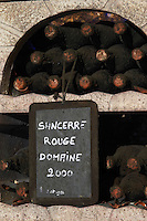 Bottles aging in the cellar. Red Domaine 2000. Domaine de la Perriere, Sancerre, Loire, France