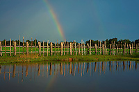 A storm and Rainbow over the fields and fence line on the road from Battambang  to Phnom Penh, Cambodia rural area