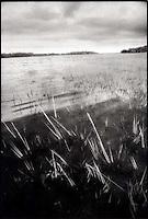 Lake reeds<br />