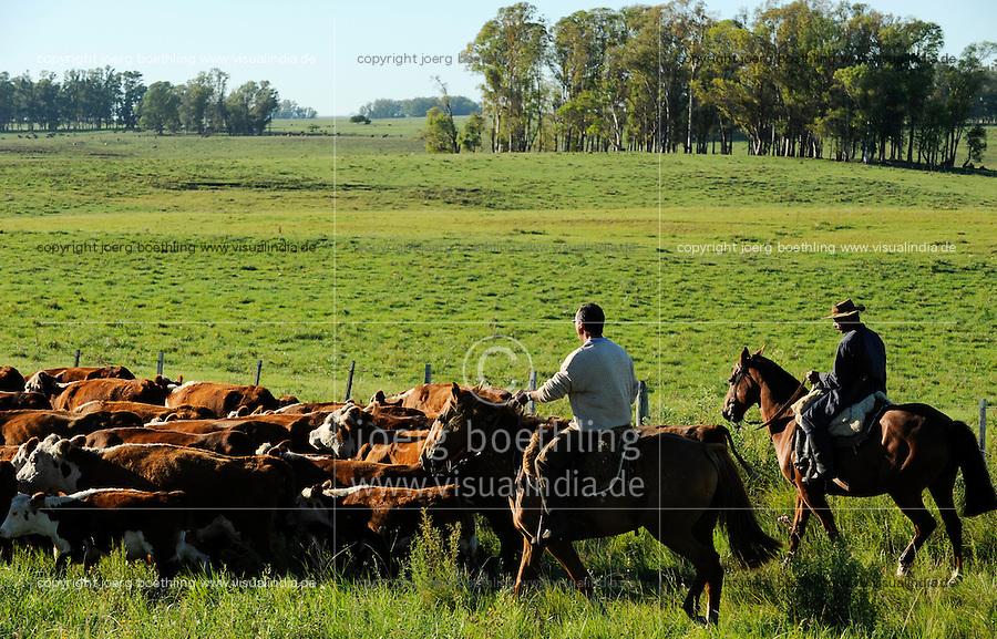 URUGUAY Salto, Gauchos auf Pferd arbeiten auf Rinderfarmen /<br /> URUGUAY Salto, Gauchos on horse at cattle farm