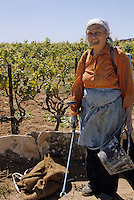 Croatie/Dalmatie/Primosten : Agricultrice sulfatant dans le vignoble<br /> PHOTO D'ARCHIVES // ARCHIVAL IMAGES<br /> YOUGOSLAVIE  1990