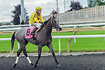 Crown Prince(8) with Jockey Gerry Olguin aboard after completing the Summer Stakes at Woodbine Race Course in Toronto, Canada on September 13, 2014 with Jockey Patrick Husbands aboard.