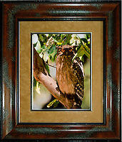 """Eurasian Eagle Owl (Bubo bubo)Image Size:  11"""" x 14""""<br /> Finished Frame Dimensions:  22"""" x 25""""<br /> Quantity Available: 1"""